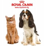 Купить Royal Canin в Витебске